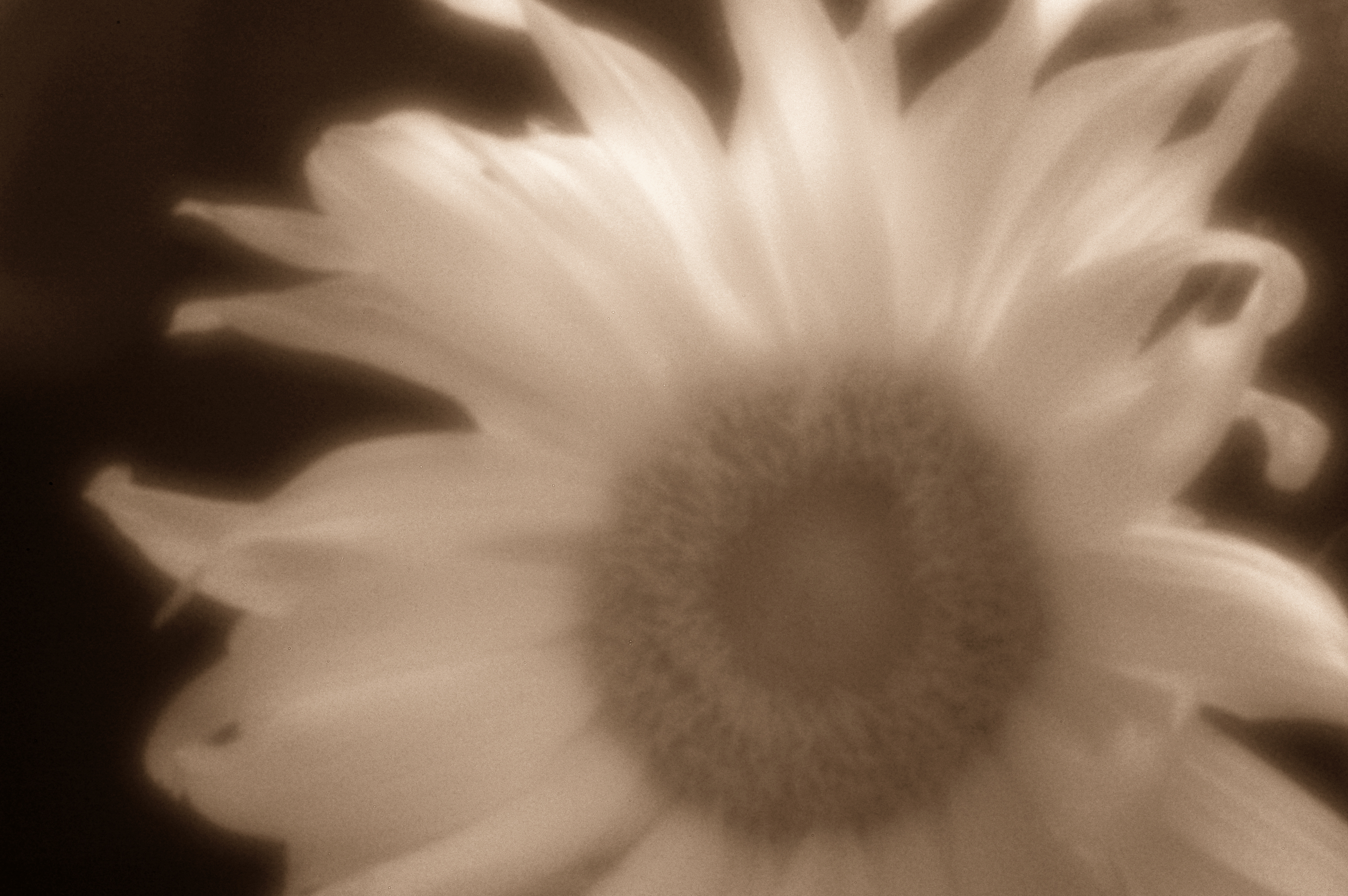 Sonnenblumen Infrarot Pinhole 850nm – Nikon DSLR